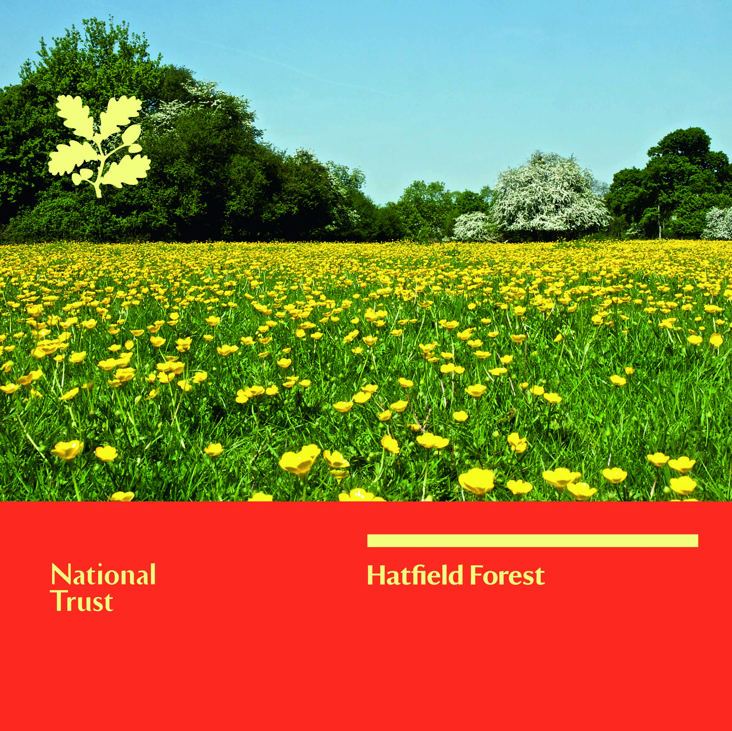 Hatfield Forest